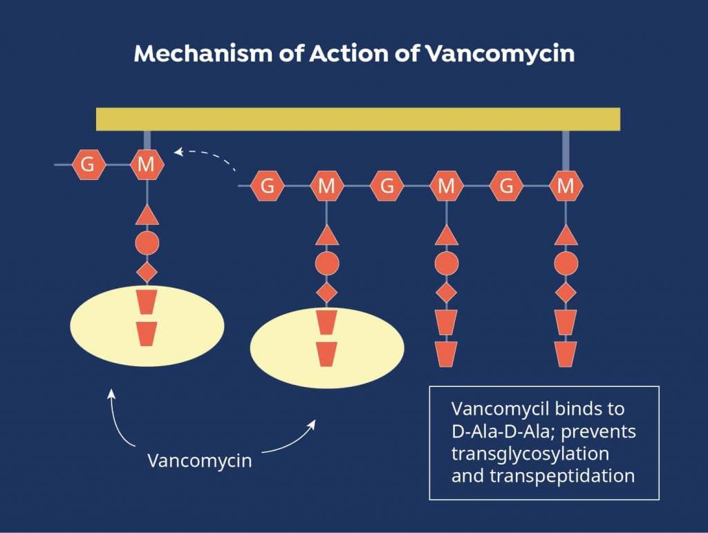 vancomycin mechanism of action